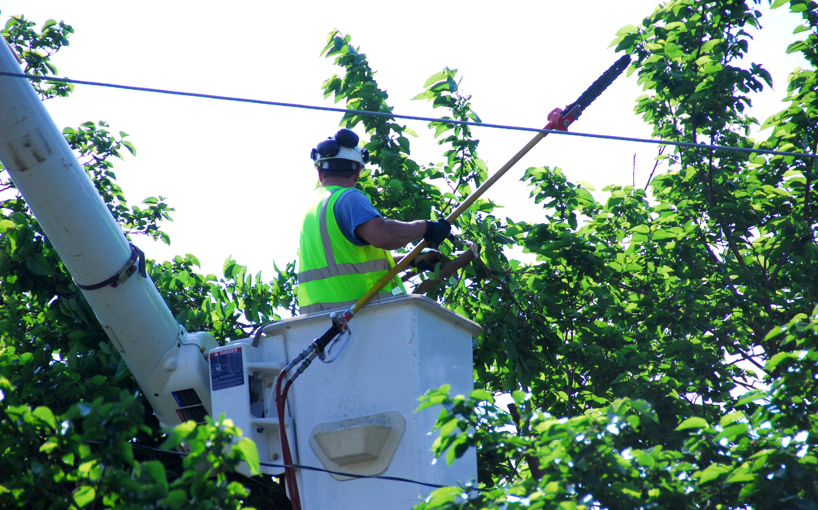 How trimming trees near power lines can kill